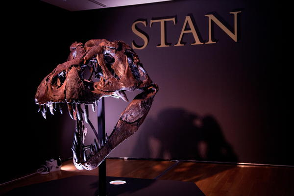Christie's to auction Tyrannousaurus Rex Skeleton © EPA